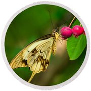 Mocker Swallowtail Butterfly And Berries Round Beach Towel