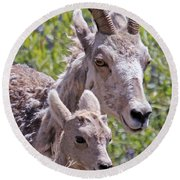 Momma And Baby Ram Round Beach Towel