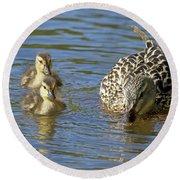 Momma Mallard And Her Ducklings Round Beach Towel