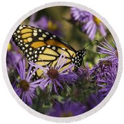 Monarch And Asters Round Beach Towel