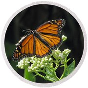 Monarch Butterfly 60 Round Beach Towel