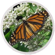 Monarch Butterfly 62 Round Beach Towel