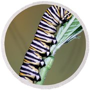 Monarch Butterfly Caterpillar Round Beach Towel