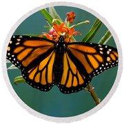 Monarch Butterfly Danaus Plexippus Round Beach Towel