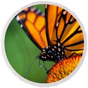 Monarch Butterfly Headshot Round Beach Towel