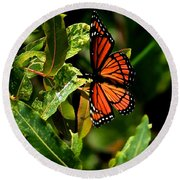 Viceroy Butterfly II Round Beach Towel