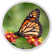 Monarch Butterfly On Lantana Flowers Round Beach Towel