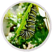 Monarch Caterpillar 5 Round Beach Towel