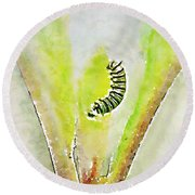 Monarch Caterpillar - Digital Watercolor Round Beach Towel