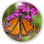 Monarch Hangs On To Buddleia Round Beach Towel