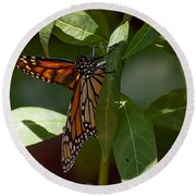 Monarch In The Shade Round Beach Towel