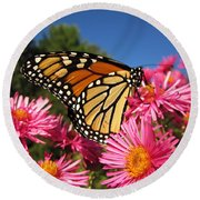 Monarch On Pink Asters Round Beach Towel