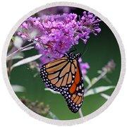 Monarch On Butterfly Bush Round Beach Towel