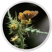 Monarch On Thistle Round Beach Towel