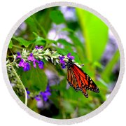 Monarch With Sweet Nectar Round Beach Towel