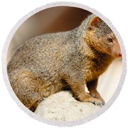 Mongoose Round Beach Towel