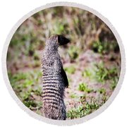 Mongoose Standing. Safari In Serengeti Round Beach Towel