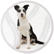Mongrel Dog, Border Collie Cross Round Beach Towel