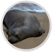 Monk Seal Sunning Round Beach Towel by Brian Harig