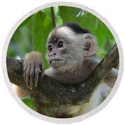 Monkey Business Round Beach Towel by Bob Christopher