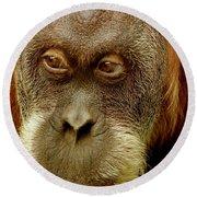 Monkey Round Beach Towel