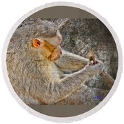 Monkey Playing With Tail Round Beach Towel