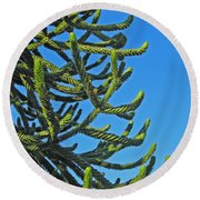 Monkey Puzzle Tree Round Beach Towel