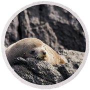 Montague Island Seal Round Beach Towel
