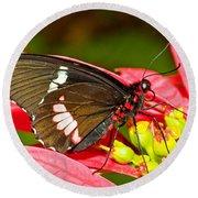 Montezuma Cattleheart Butterfly Round Beach Towel
