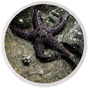 Moody Starfish Iv Round Beach Towel