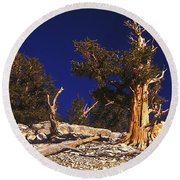 Moon And Bristlecone Pines Round Beach Towel