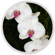 Moon Orchid With Purple Center Round Beach Towel