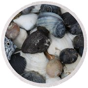 Moon Snails And Shells Still Life Round Beach Towel