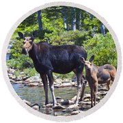 Moose And Baby 4 Round Beach Towel