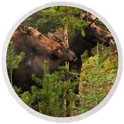 Moose Family At The Shredded Pine Round Beach Towel