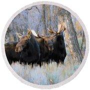 Moose Meeting Round Beach Towel