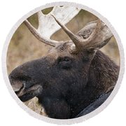 Moose Pictures 101 Round Beach Towel