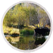 Moose Reflection Round Beach Towel