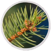 More Spruce Buds Round Beach Towel