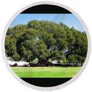 Moreton Fig Tree In Santa Barbara Round Beach Towel