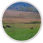 Morning Deer In Cades Cove Round Beach Towel