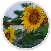 Morning Field Of Sunflowers Round Beach Towel