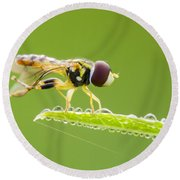 Morning Hoverfly Round Beach Towel
