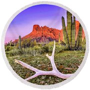 Morning In Organ Pipe Cactus National Monument Round Beach Towel