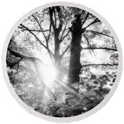 Morning In The Forest Round Beach Towel