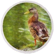 Morning Mallard Round Beach Towel