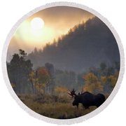Morning Moose Round Beach Towel