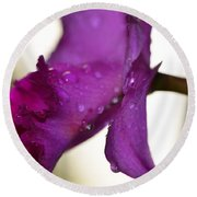 Morning Rain - Orchid Photography By Sharon Cummings Round Beach Towel