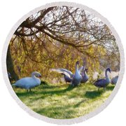 Morning Stretch - Impressions Round Beach Towel