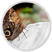 Morphos Butterfly On White Baseball Cap Art Prints Round Beach Towel